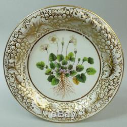 Antique Davenport Botanical Specimen Hand Painted Porcelain Cabinet Plate C. 1815